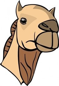 camel,head,animal,mammal,exotic,desert,zoo,contour,outline,colour,media,clip art,public domain,image,png,svg