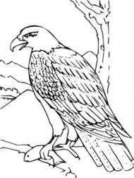 coloring,book,bald,eagle,clip