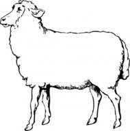 sheep,clip