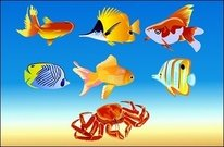 fish,crab,animal,sea,flounder,trout,gold,hermit,underwater