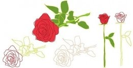 nature,rose,flower,leaf,outline,_nature