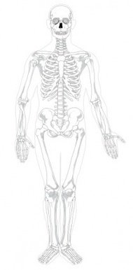 human,skeleton,front,text,color