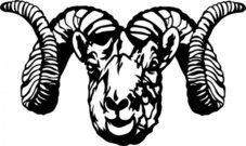 dall,sheep,clip