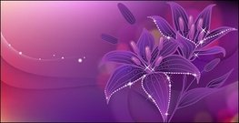 dream,lily,full,bloom,flower,violet,nature,floral,element,blooming