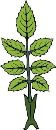 mint,branch,rose,leaf,plant,media,clip art,externalsource,public domain,image,png,svg
