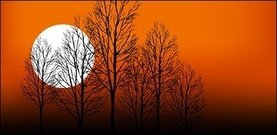 download,sunset,tree,lanscape with tree,fall setting,dusk,moon,scenery,silhouette,shadow,black,sun,orange,tree,silhouette