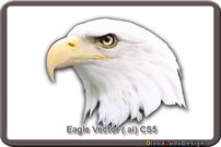 animal,bird,eagle,bald eagle,wild animal,hunting bird