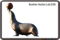 animal,fun,sea lion,ocean,sea,sea animal,ocean animal