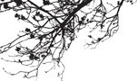 Flower Tree Branches - Vector