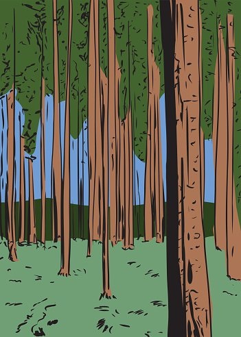 Trees tall. Forest background with premium