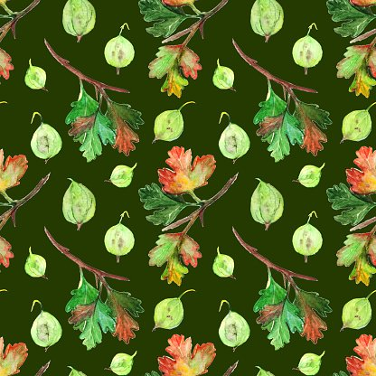 Watercolor gooseberry berry leaf branch seamless pattern texture background
