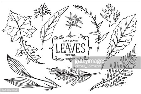 Hand drawn vector leaves.