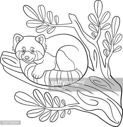 Coloring pages. Little cute red panda on the tree branch.