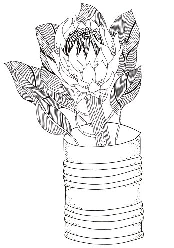 Coloring book page for adult and children. Protea flower art.