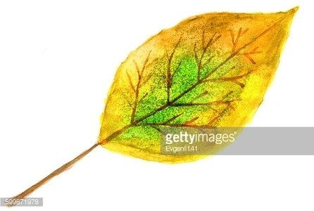 Autumn yellow-green leaf in watercolor.