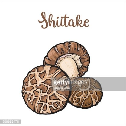 Set of shiitake edible mushrooms