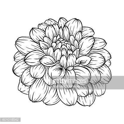 Black And White Dahlia Flower Isolated On Premium Clipart