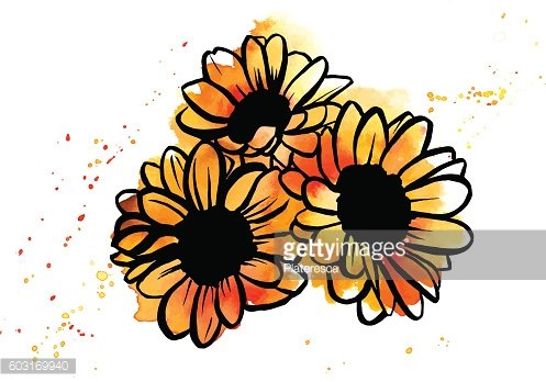 Freehand Vector And Watercolor Drawing Of Sunflowers Bouquet