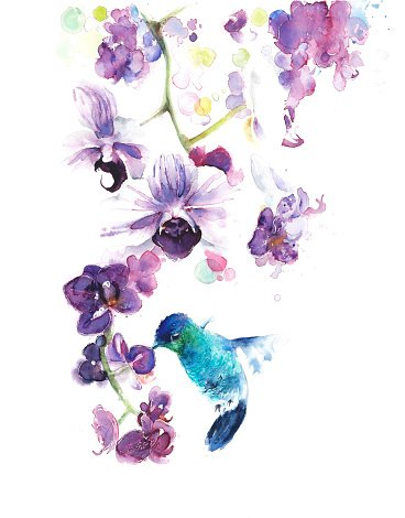 Orchids Tropical Flowers With Hummingbird Watercolor Painting
