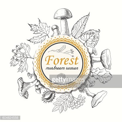 Mushrooms and autumn leaves in a circle