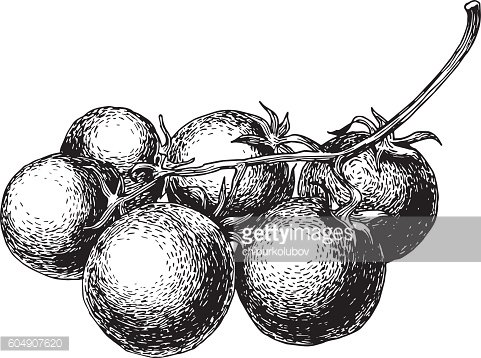 Hand drawn tomatoes isolated on white background