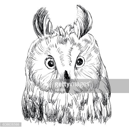sketch of owl