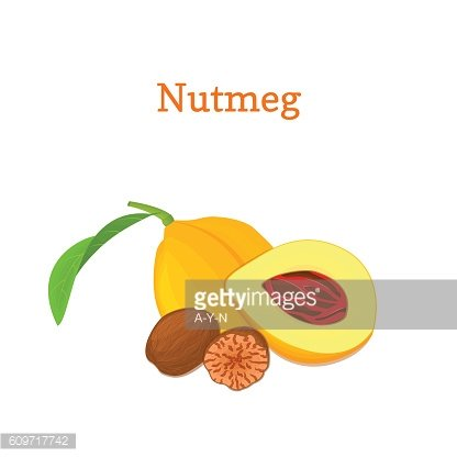 Nutmeg with leaves. Vector illustration of a handful spice nut