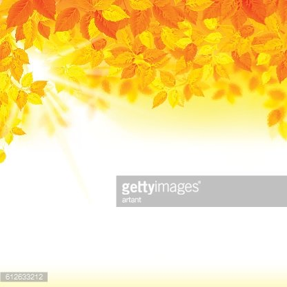 autumn decoration composition with season leaves