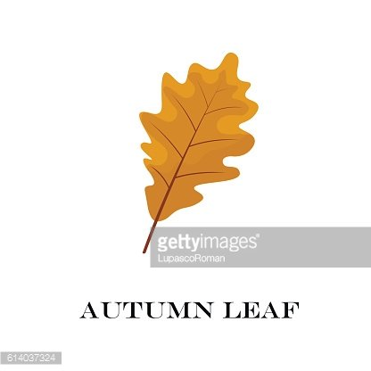 autumn leaves isolated on white background. simple cartoon flat style
