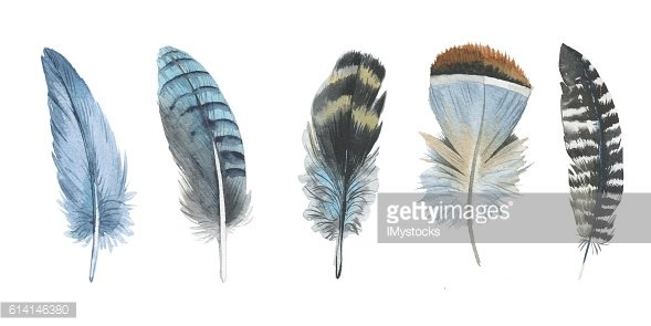 Watercolor bird feather from wing isolated.