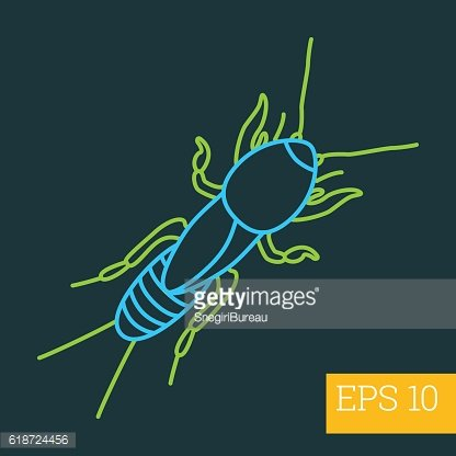 mole beetle insect outline vector