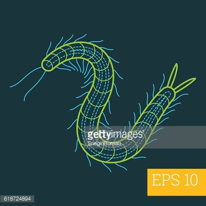 millipede insect outline vector
