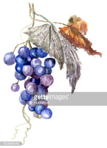 Red Fruit Grape Illustration, Red Grapes, Round Grapes, Cartoon  Illustration PNG Transparent Clipart Image and PSD File for Free Download