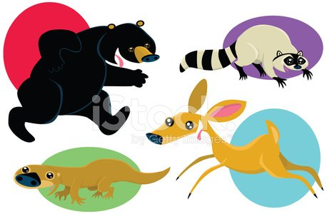 Forest Animals in Action