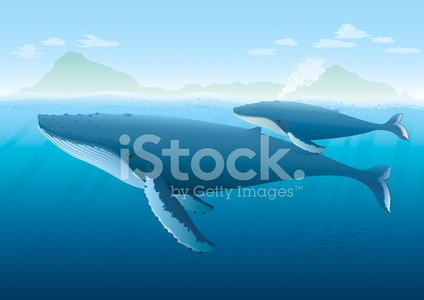 Humpback Whale mother with young on surface.