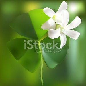 Shamrock - Vector Illustration