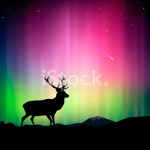 Northern lights with a deer in the foreground