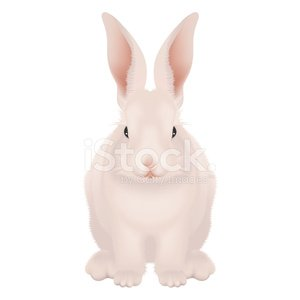 Bunny realistic. White and pink happy