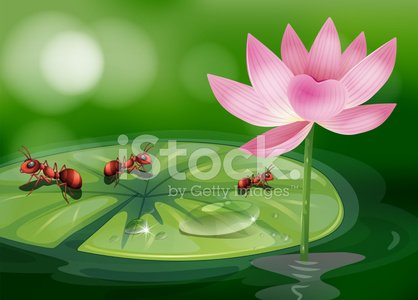 Three ants above the waterlily plant