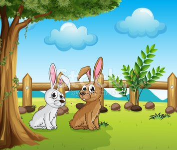 Two bunnies inside the fence