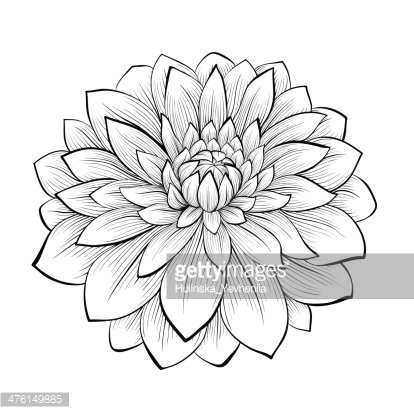 Beautiful Monochrome Black And White Dahlia Flower Isolated Premium