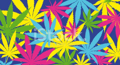 Cannabis leafs - Colorful pattern. Large Vector.