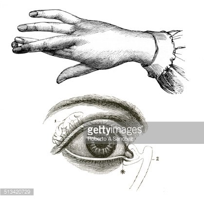 Eye And Hand Anatomy Drawings Premium Clipart Clipartlogo