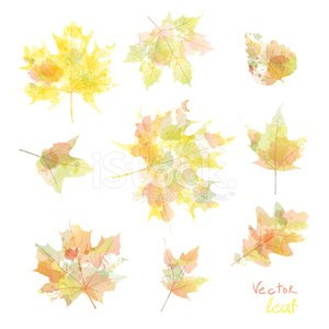 Vector herfstbladeren aquarel maple leaf flora