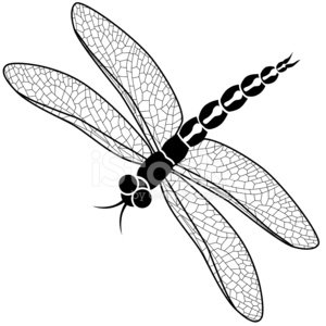 vector dragonfly in black and white