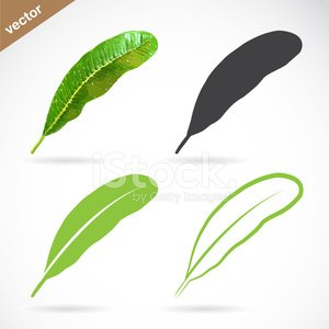 Vector image of leaves design on white background