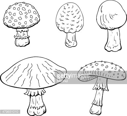 Mushrooms on white background. Drawing style black on white.