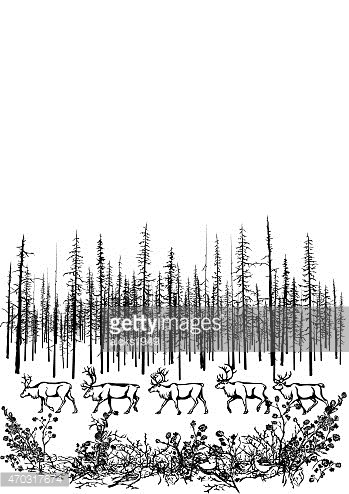 Deer in the northern taiga.