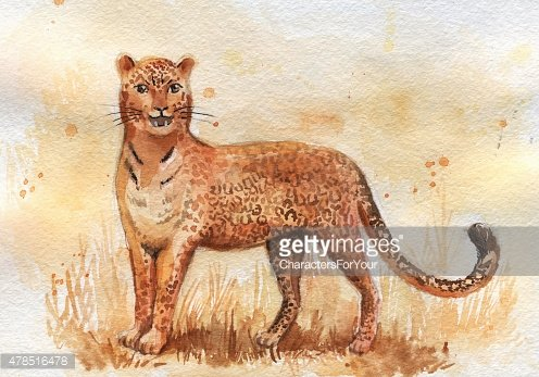 watercolor hand-drawn leopard standing on the grass