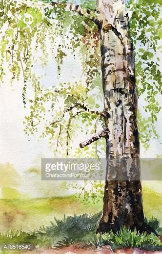 Watercolor hand-drawn illustration with birch